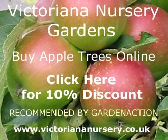 Apple Trees at 10% dsicount from Victoriana Nurseries. RHS Silver Medalists.